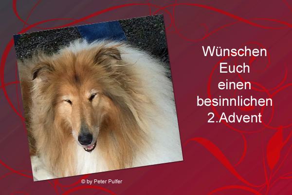 An den Beitrag angehängtes Bild: http://colliewelt.de/whithorsehill/Bilder/Userbilder/2162.jpg.