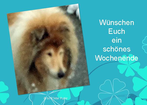 An den Beitrag angehängtes Bild: http://colliewelt.de/whitehorsehill/Bilder/Userbilder/2172.jpg