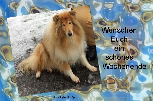 An den Beitrag angehängtes Bild: http://colliewelt.de/whitehorsehill/Bilder/Userbilder/2177.jpg
