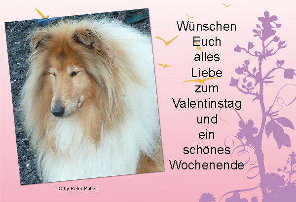 An den Beitrag angehängtes Bild: http://colliewelt.de/whitehorsehill/Bilder/Userbilder/2178.jpg