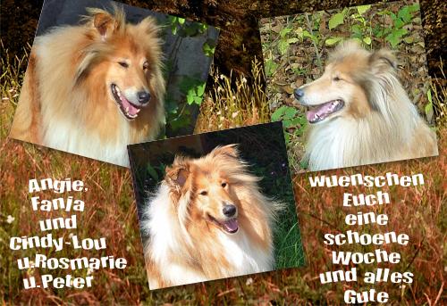 An den Beitrag angehängtes Bild: http://colliewelt.de/whitehorsehill/Bilder/Userbilder/855.jpg
