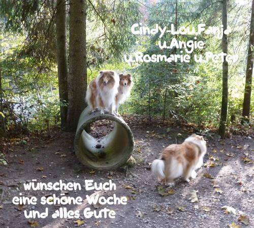 An den Beitrag angehängtes Bild: http://colliewelt.de/whitehorsehill/Bilder/Userbilder/943.jpg