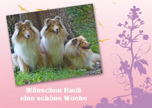 An den Beitrag angehängtes Bild: http://colliewelt.de/whitehorsehill/Bilder/Userbilder/950.jpg
