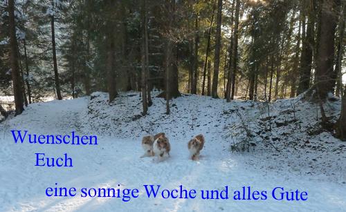 An den Beitrag angehängtes Bild: http://colliewelt.de/whitehorsehill/Bilder/Userbilder/954.jpg