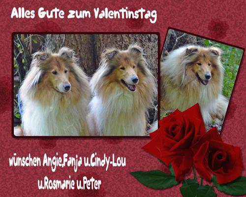 An den Beitrag angehängtes Bild: http://colliewelt.de/whitehorsehill/Bilder/Userbilder/957.jpg