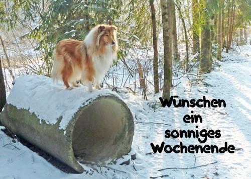 An den Beitrag angehängtes Bild: http://colliewelt.de/whitehorsehill/Bilder/Userbilder/967.jpg