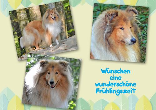 An den Beitrag angehängtes Bild: http://colliewelt.de/whitehorsehill/Bilder/Userbilder/972.jpg