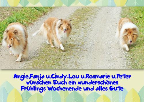 An den Beitrag angehängtes Bild: http://colliewelt.de/whitehorsehill/Bilder/Userbilder/978.jpg