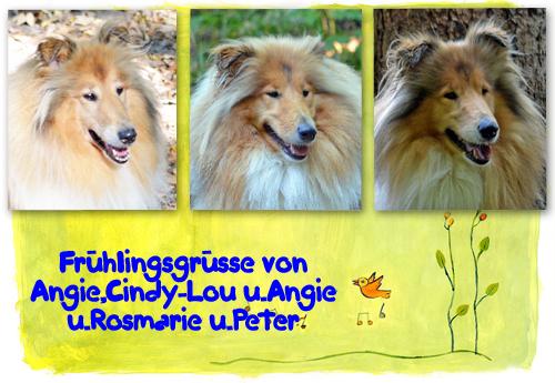 An den Beitrag angehängtes Bild: http://colliewelt.de/whitehorsehill/Bilder/Userbilder/980.jpg